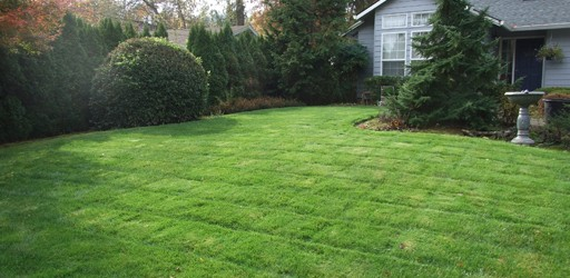 Admirable Landscapes provides lawn maintenance services that include lawn mowing and edging – both hard and soft. We aim to keep your lawn healthy and beautiful.
