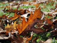 Leaf and weed control is included in our regular NE Portland yard maintenance plans. This also includes yard irrigation and yard care. Weeds are repetitive and will hold on even in unfavorable conditions.